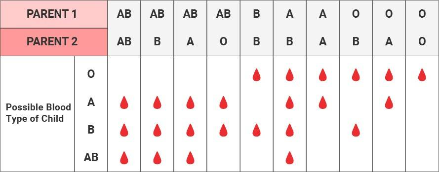 Blood types groups chart a b ab o red cross blood services