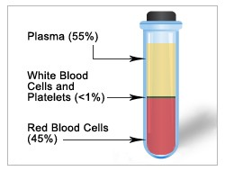 Blood components, including plasma, white blood cells, platelets and red blood cells